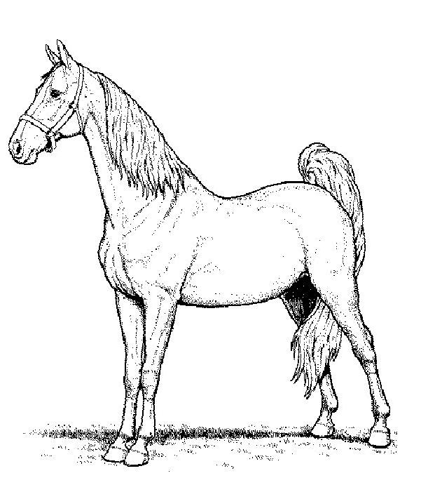 Disegno 3 di cavalli da stampare e colorare