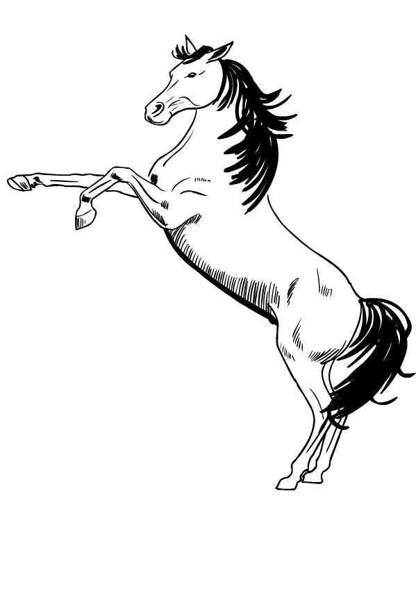 Disegno di cavalli da stampare e colorare