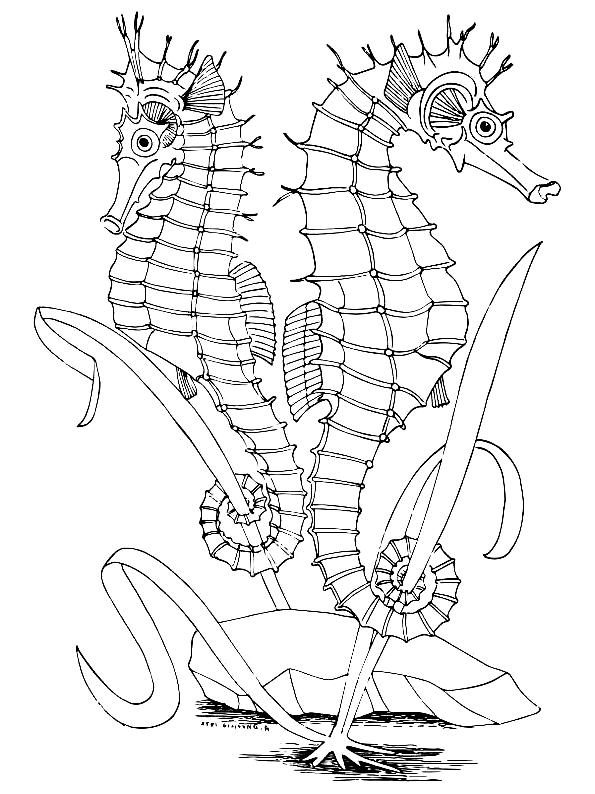 Disegno 15 di Cavallucci Marini da stampare e colorare