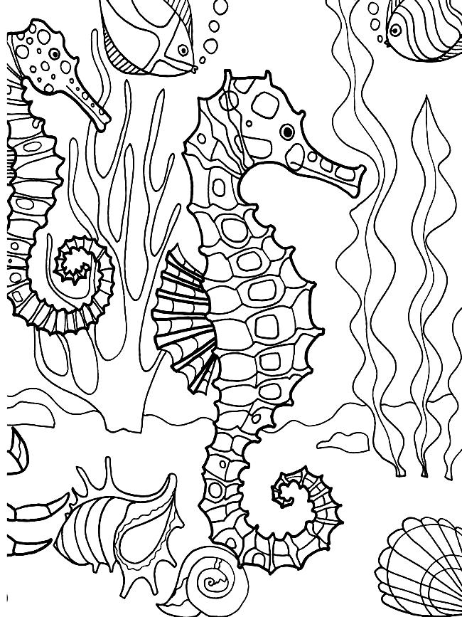Disegno 17 di Cavallucci Marini da stampare e colorare