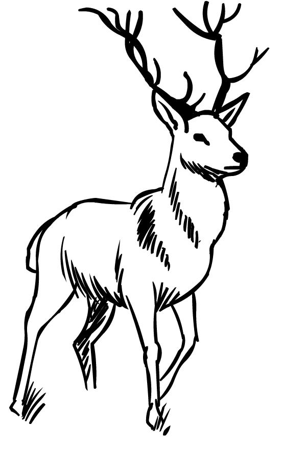Disegno di cervi da stampare e colorare