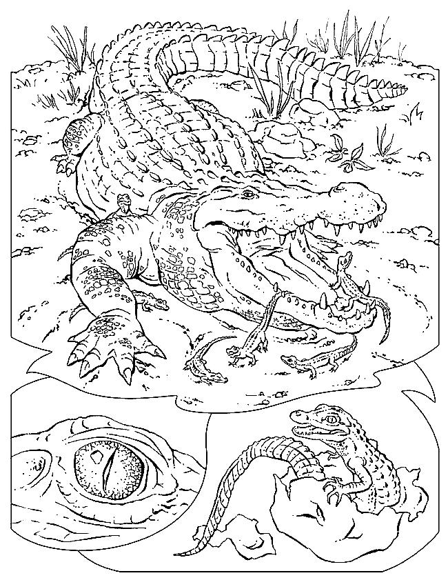 Disegno 6 di coccodrilli da stampare e colorare