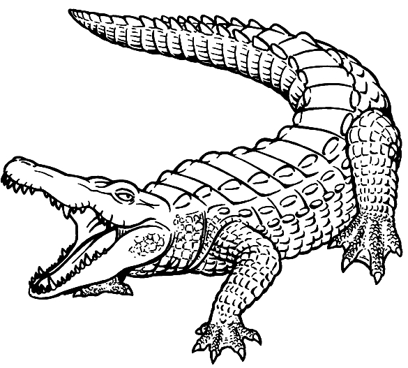 Disegno 10 di coccodrilli da stampare e colorare