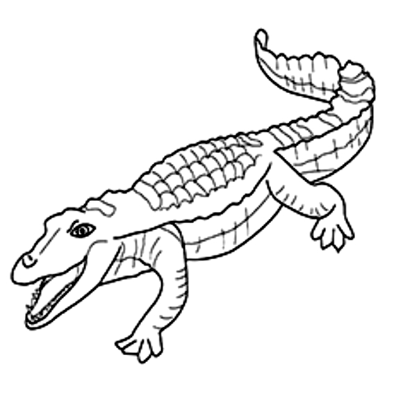 Disegno 12 di coccodrilli da stampare e colorare