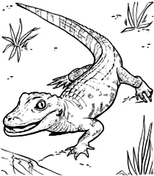 Disegno 17 di coccodrilli da stampare e colorare