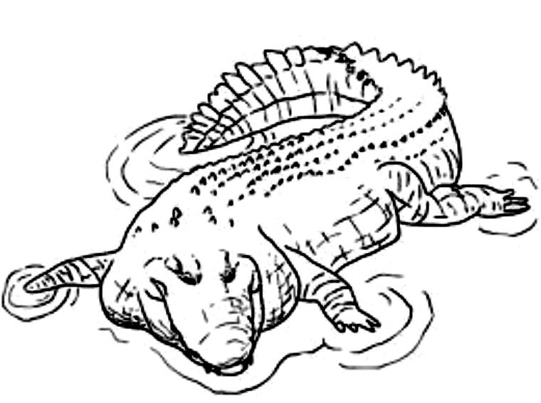 Disegno 20 di coccodrilli da stampare e colorare