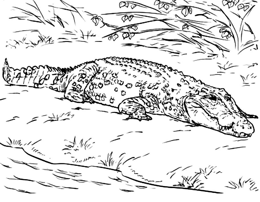Disegno 21 di coccodrilli da stampare e colorare