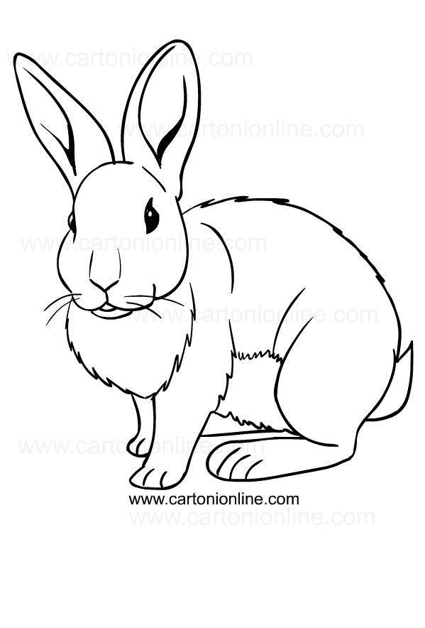 Disegno di conigli da stampare e colorare