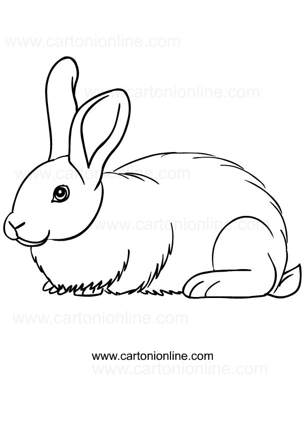 Disegni Conigli Da Colorare.Disegno Di Conigli Da Colorare