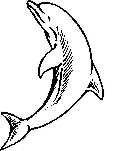 Disegno 21 Di Delfini Da Colorare