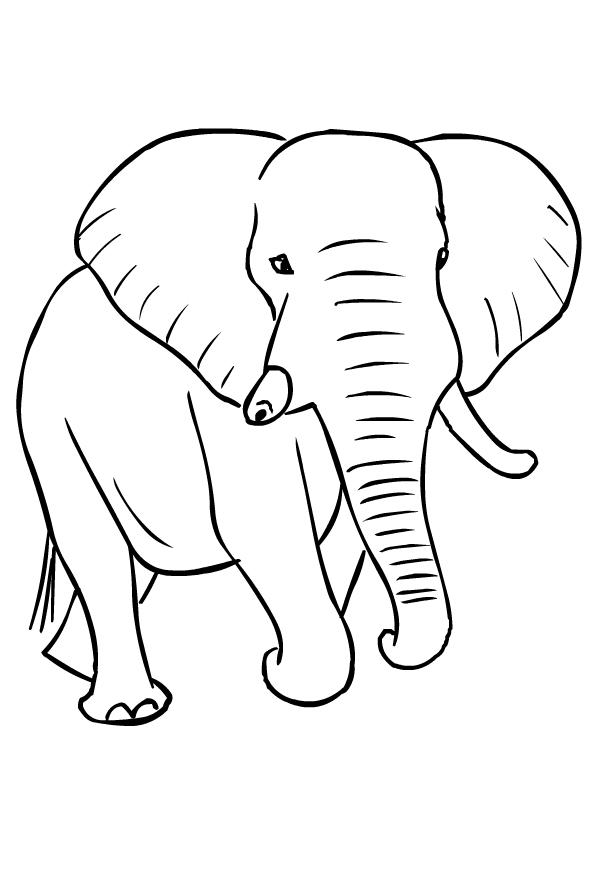 Dibujo de elefantes para imprimir y colorear