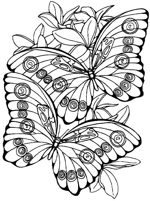 Disegno 5 di farfalle da stampare e colorare