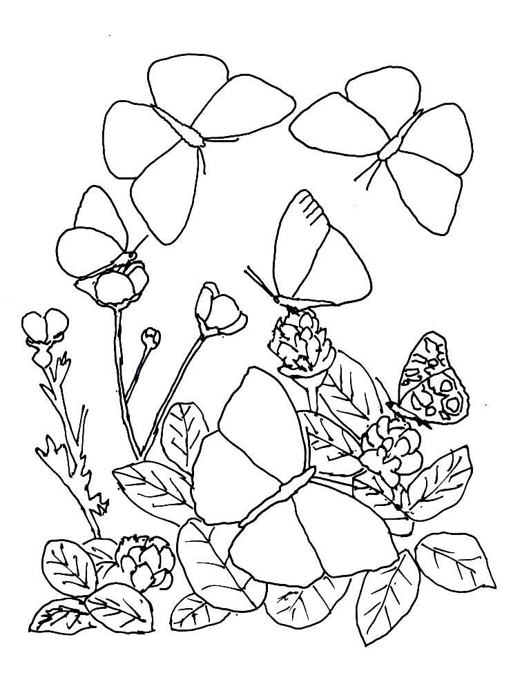 Disegno 9 di farfalle da stampare e colorare