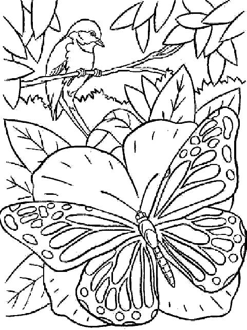 Disegno 12 di farfalle da stampare e colorare