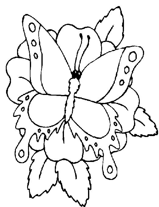 Disegno 13 di farfalle da stampare e colorare