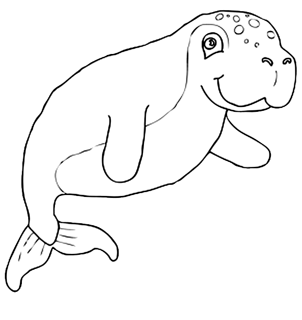 Disegno 9 di foche da stampare e colorare