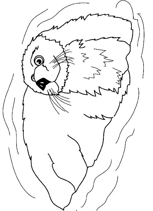 Disegno 15 di foche da stampare e colorare