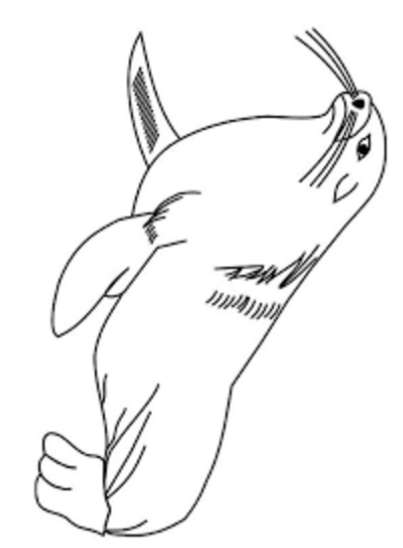 Disegno 24 di foche da stampare e colorare