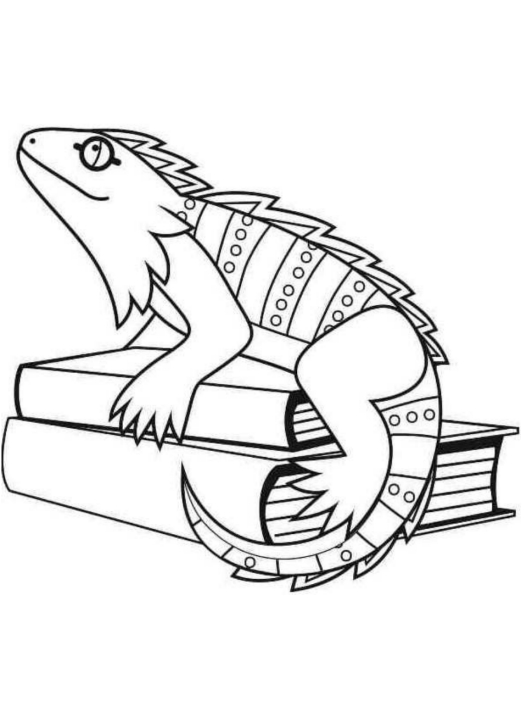 Disegno 2 di iguane da stampare e colorare