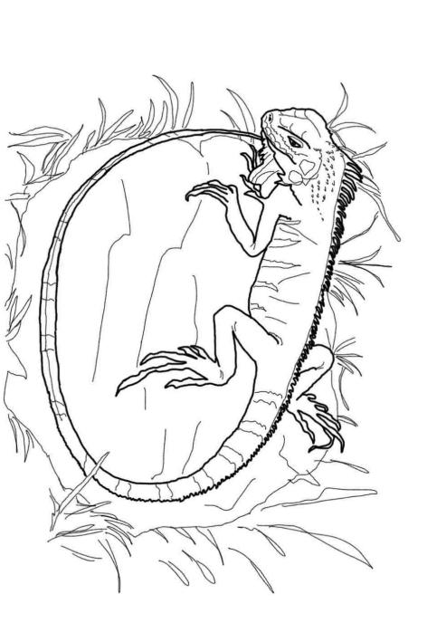 Disegno 18 di iguane da stampare e colorare