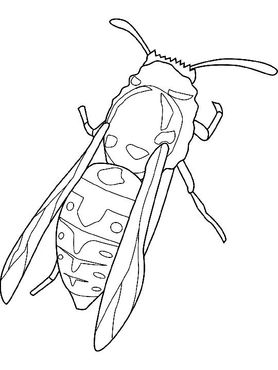 Disegno 1 di insetti da stampare e colorare