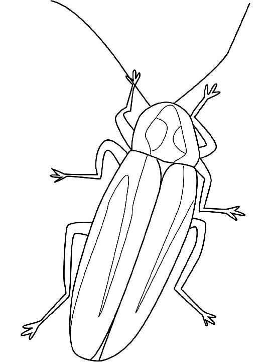 Disegno 5 di insetti da stampare e colorare