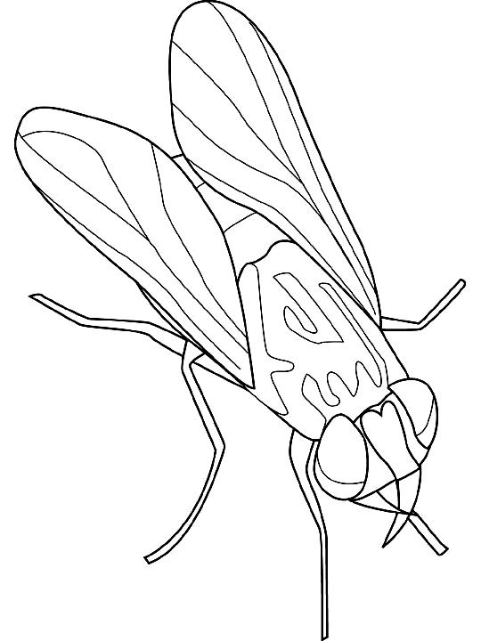 Disegno 8 di insetti da stampare e colorare
