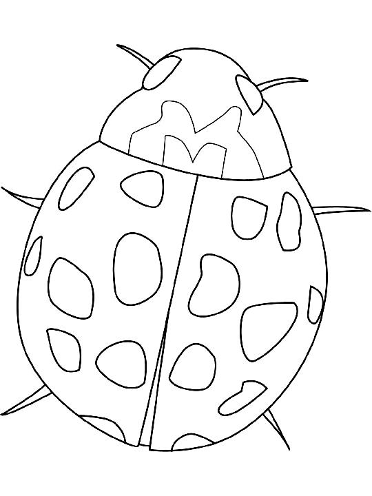Disegno 9 di insetti da stampare e colorare