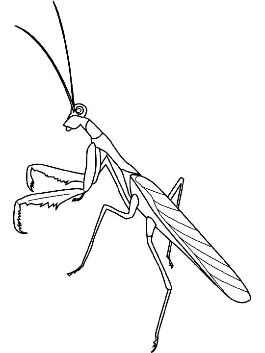 Disegno 11 di insetti da stampare e colorare