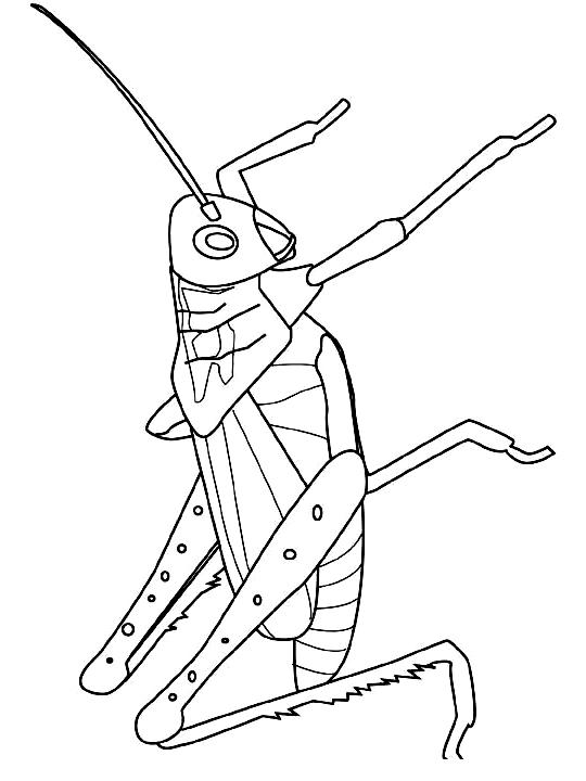 Disegno 14 di insetti da stampare e colorare