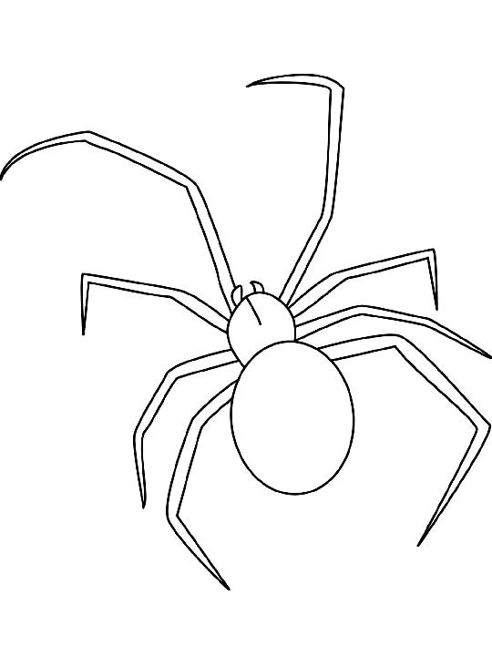 Disegno 15 di insetti da stampare e colorare