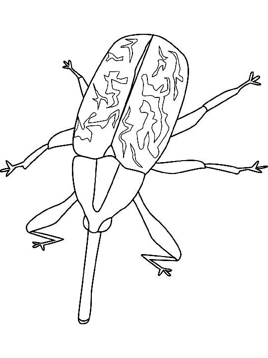 Disegno 16 di insetti da stampare e colorare