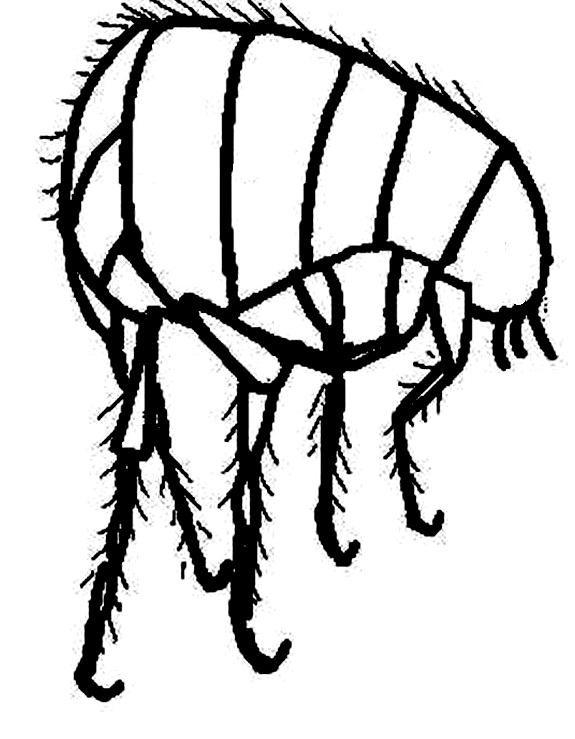Disegno 21 di insetti da stampare e colorare