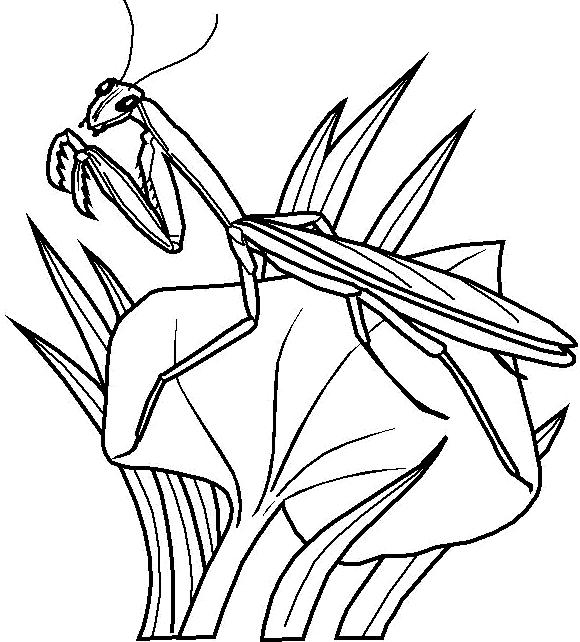 Disegno 24 di insetti da stampare e colorare