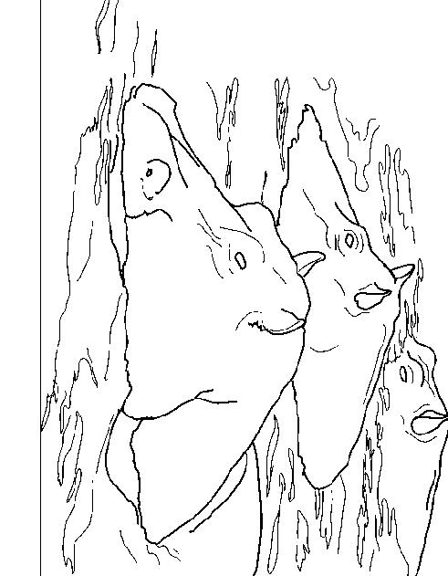 Disegno 2 di ippopotami da stampare e colorare