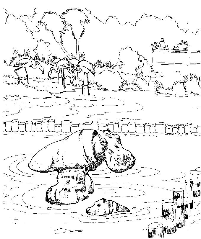 Disegno 4 di ippopotami da stampare e colorare
