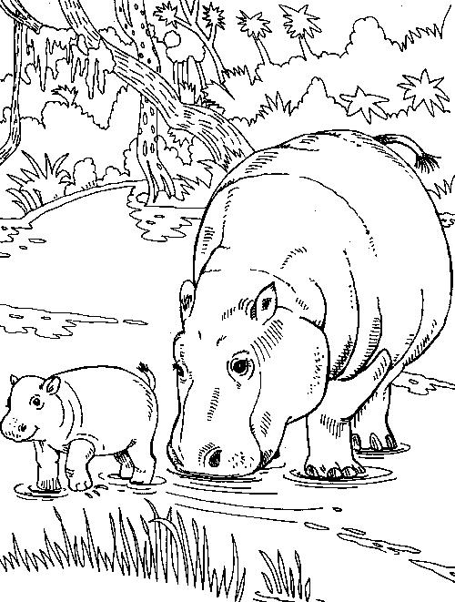 Disegno 10 di ippopotami da stampare e colorare