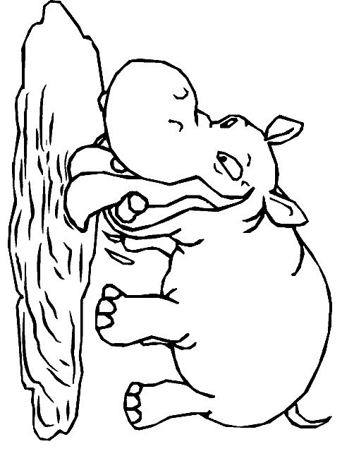 Disegno 13 di ippopotami da stampare e colorare