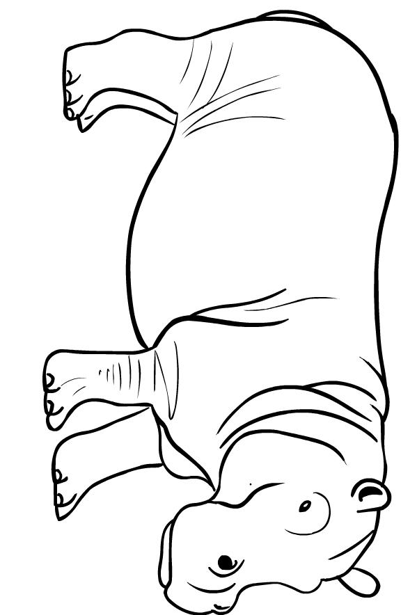 Disegno di ippopotami da stampare e colorare