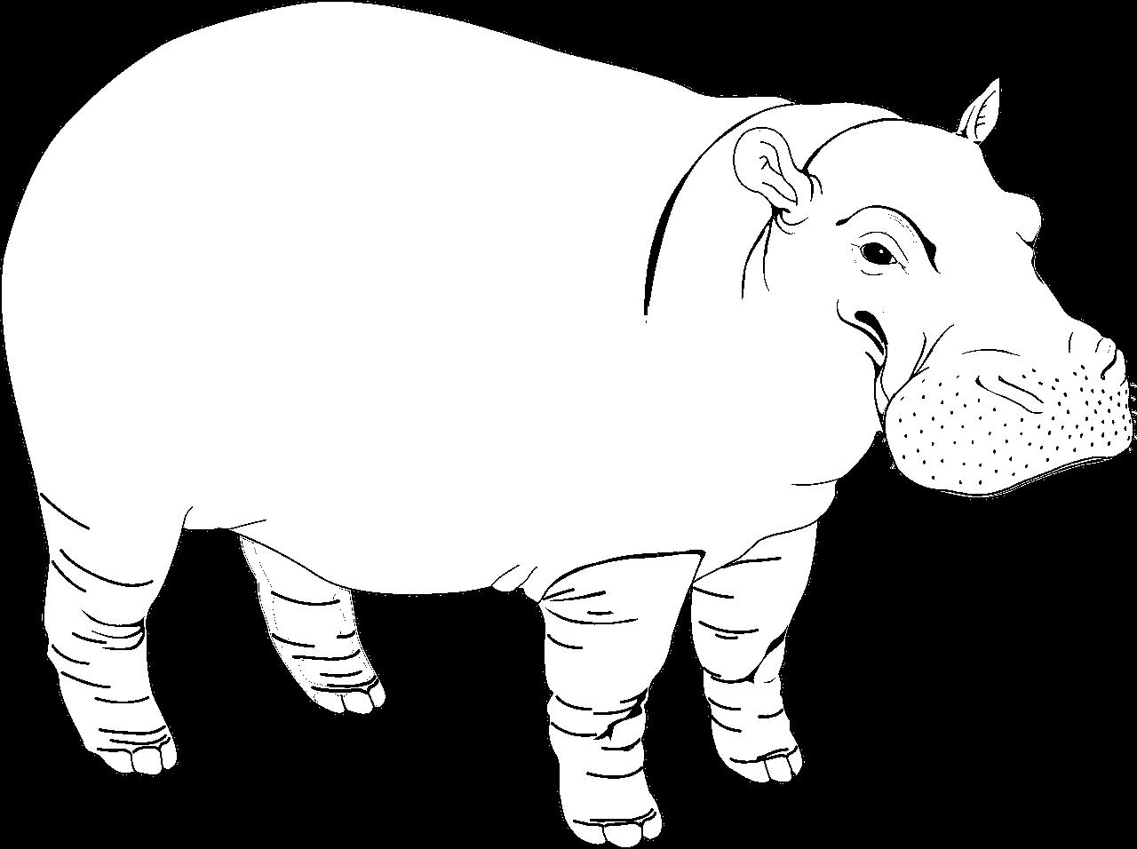 Disegno da colorare di ippopotamo realistico con linea fine