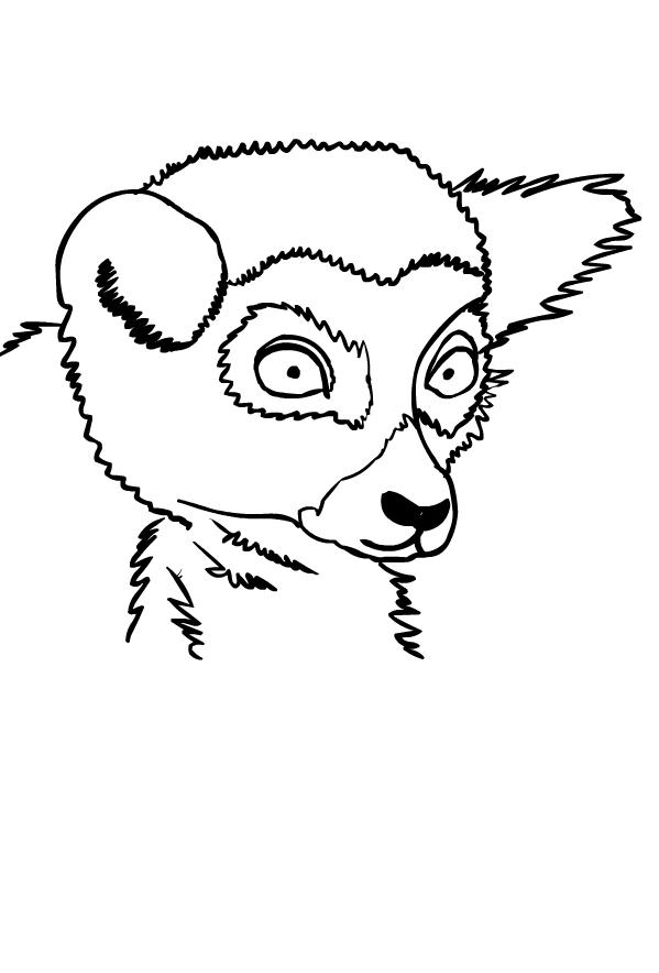 Disegno di lemuri da stampare e colorare
