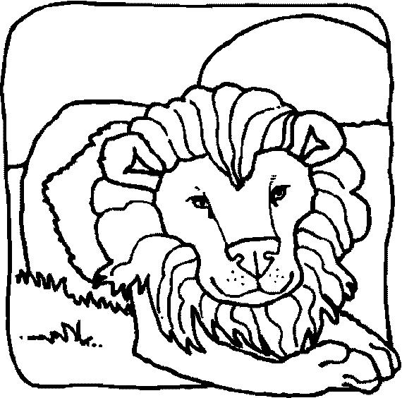 Disegno 2 di leoni da stampare e colorare