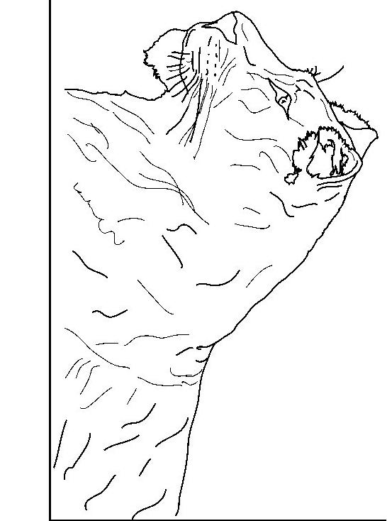 Disegno 4 di leoni da stampare e colorare