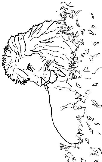 Disegno 18 di leoni da stampare e colorare