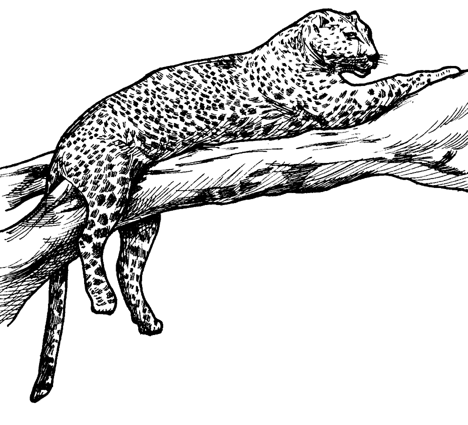 Disegno di leopardi da stampare e colorare