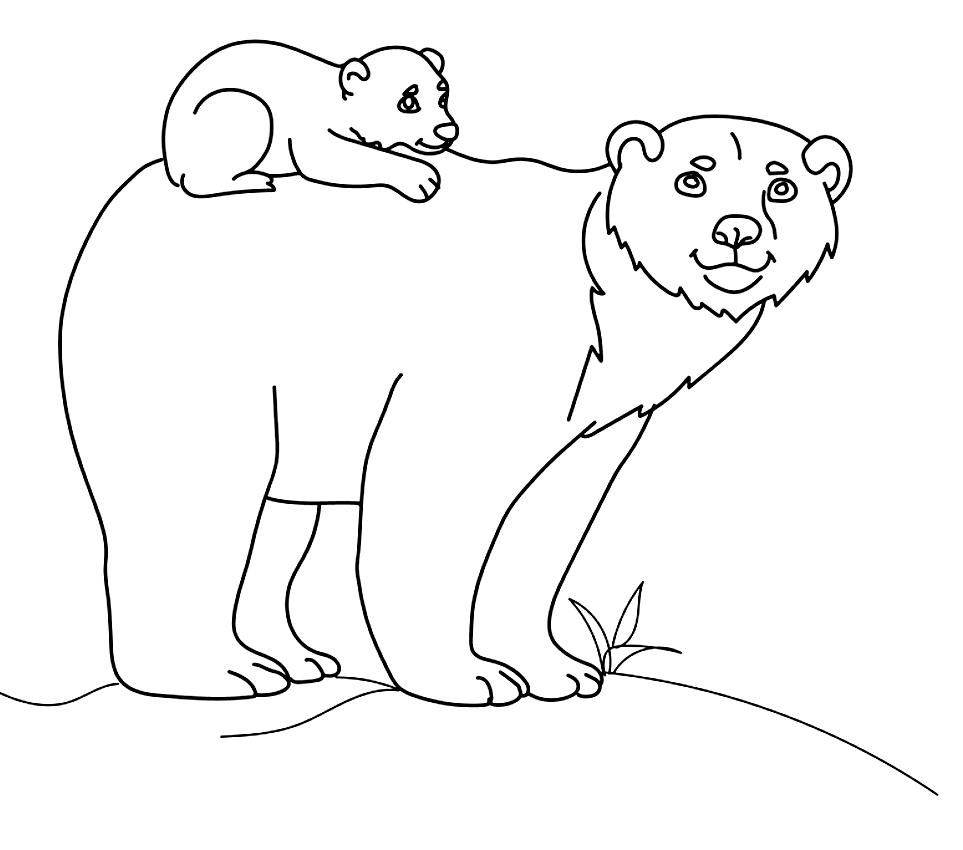 Disegno Di Orsi Da Colorare