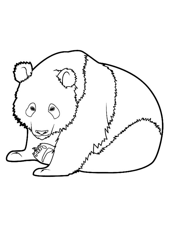 Disegno 2 di panda da stampare e colorare