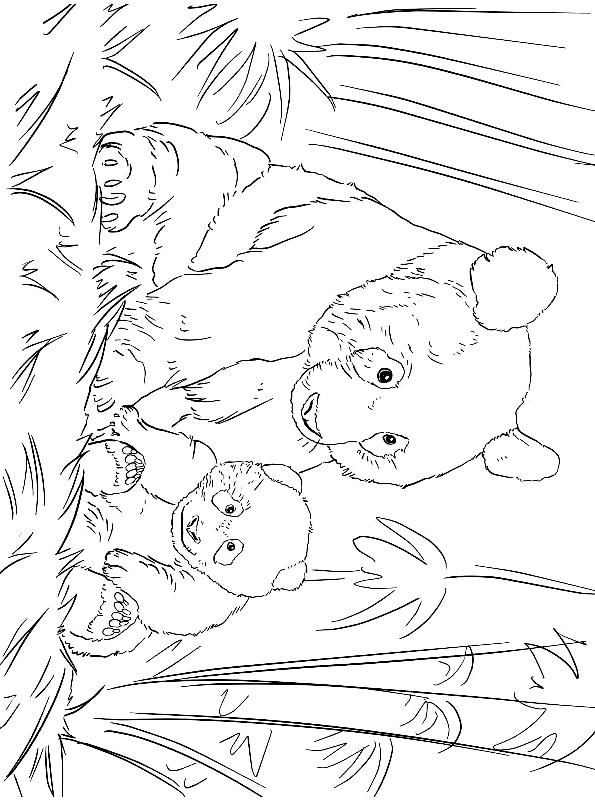 Disegno 5 di panda da stampare e colorare