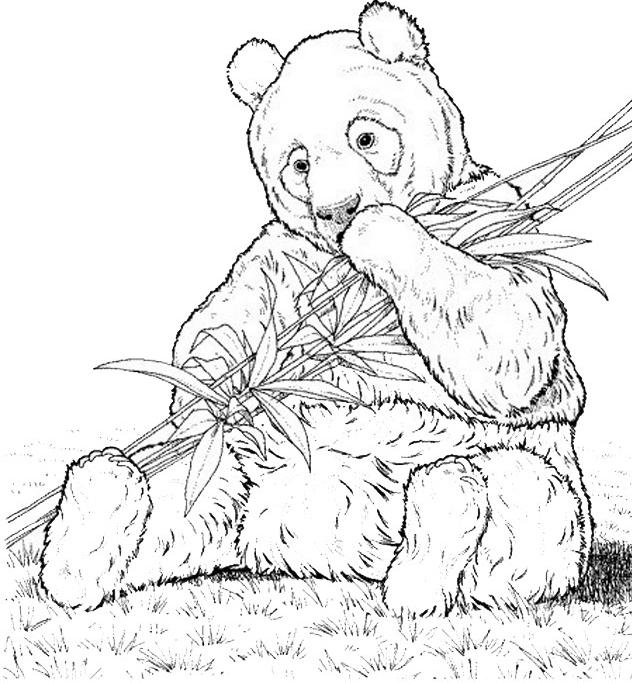Disegno 10 di panda da stampare e colorare