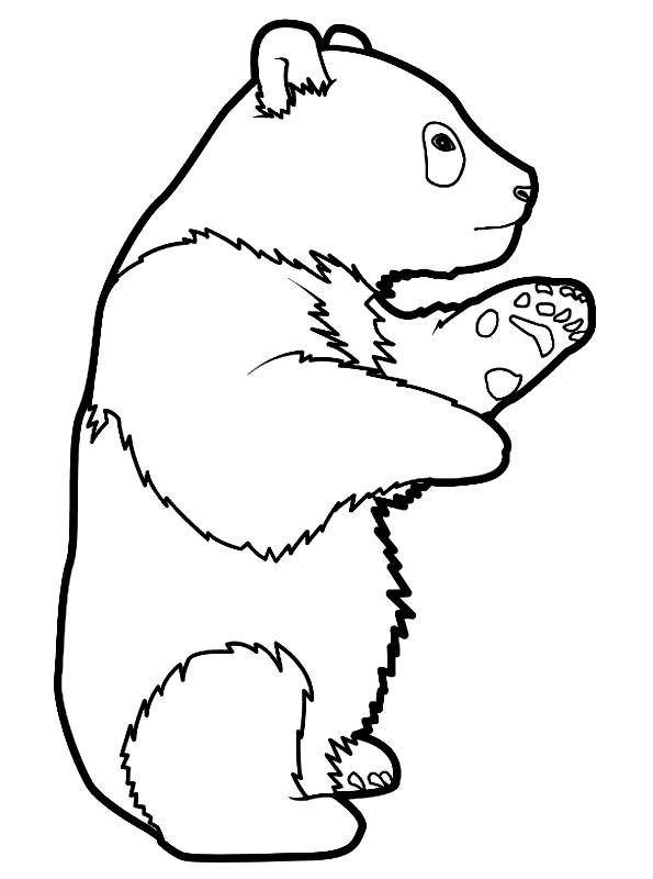 Dibujo 11 de panda para imprimir y colorear